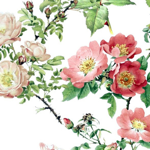 Watercolor English Rose ~ Victoria's Garden on White~ Large