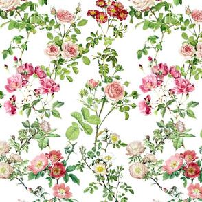 Watercolor English Rose ~ Victoria's Garden ~ Medium