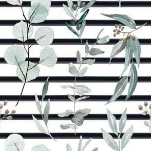 Eucalyptus Edition 3 + Black Stripe