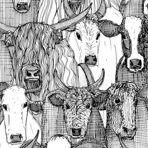 just cattle black white