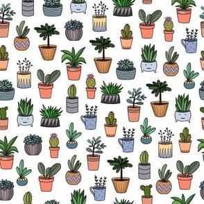 housplants in pots