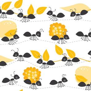 ants in summer