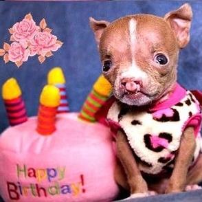 Baby Baby O So Cute Pitbull