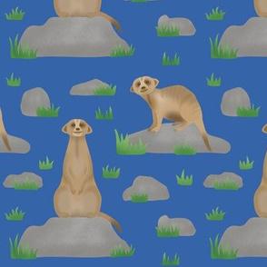 Meerkat Friends - Bright blue