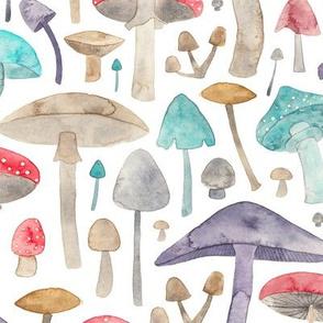 Toadstools and Mushrooms