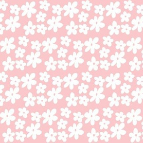 Baby Pink Daisy Flowers