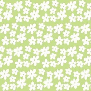 Apple Green Daisy Flowers
