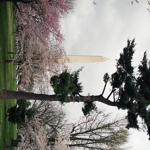 KRLGFP--WashingtonDCTeaTowel