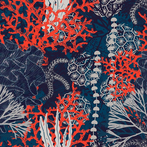 Corals and Starfish