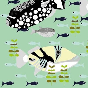 triggerfish2-ed