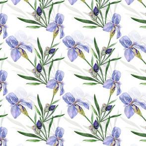 Iris (medium scale)
