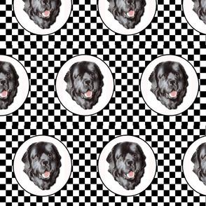 checkerboard newfy portrait