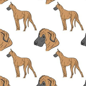 Great Danes - fawn