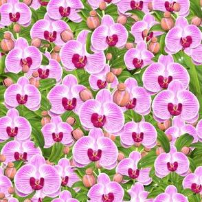 Abundance of Orchids
