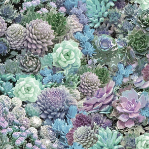 succulents soft blues
