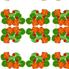 Nasturtium Garden-medium