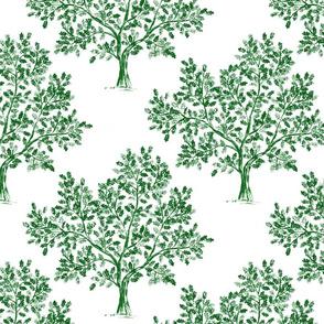 Oak tree (Emerald Green)