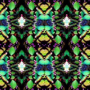 Cactus progression