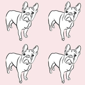 Frenchie on Blush