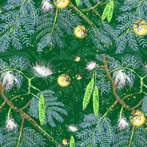 Fireflies and Mimosas