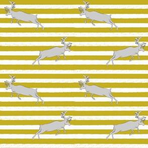 Mustard stripe and Gray Deer