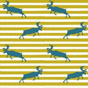Mustard stripe and Blue Deer