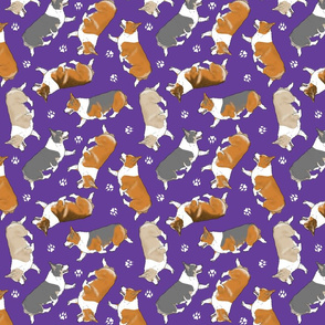 Trotting Pembroke Welsh Corgis and paw prints - purple