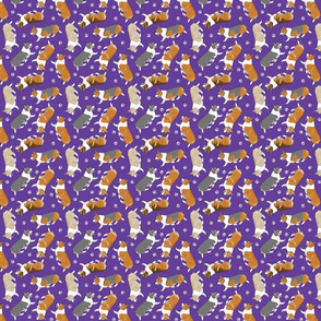 Trotting Pembroke Welsh Corgis and paw prints - tiny purple