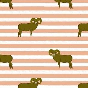 Striped Big Sheep