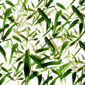 Bamboo Midday in the sun