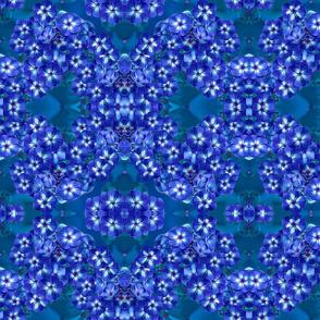 Phlox Blue 10