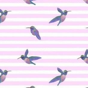 Watercolor hummingbird on stripe