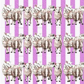 lambsruffle
