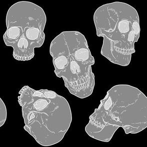 X-Ray of Skulls