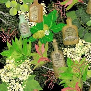 Medicinal Plants Hawaii