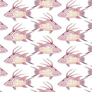 Hogfish 1 on White