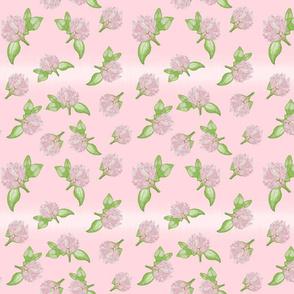 Delicate Clovers Pastel Pink BG