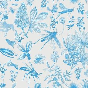 cornflower blue insects garden