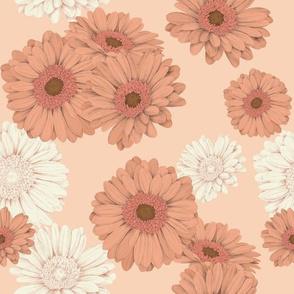 Gerbera daisies in orange