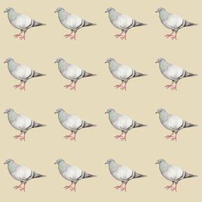 Pigeons on parade