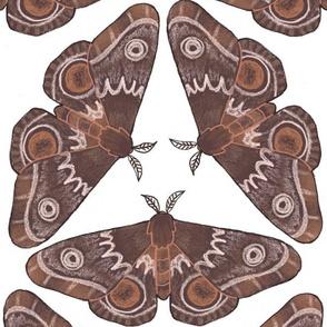 moth pattern variant 2-01