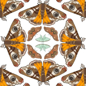 moth pattern variant block 2-01