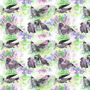 Jackdaw Floral
