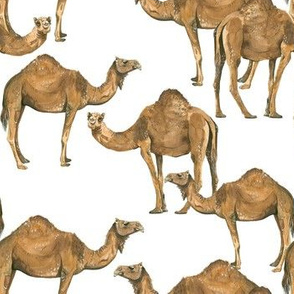 Camels on White - Smaller Scale