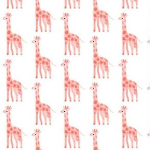 baby girl giraffes