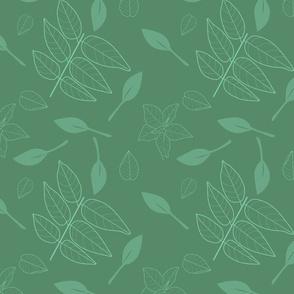 fuchsia  leaves