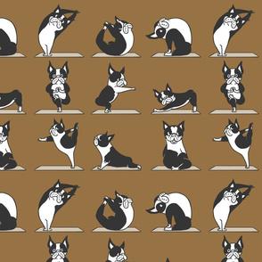 Boston Terriers Yoga