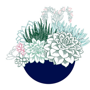 Succulents Blue Bowl Panel