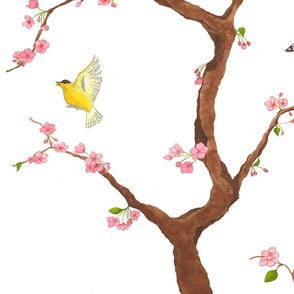 jenny cherry blossoms on white