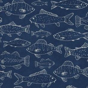 Small Scale Freshwater Fish Bass Trout Salmon Carp